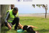 Sokak Hayvanları Erdemli Belediyesi İle Sahipsiz Değil