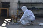 Yenişehir Belediyesi Sokaktaki Canları Da Unutmuyor