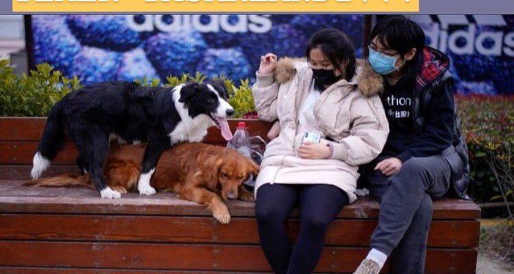 Çin'den flaş karar! Kedi ve köpek eti satışı yasaklanıyor…